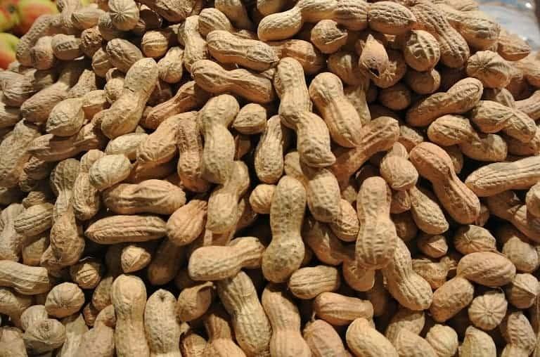 ciri ciri kacang tanah